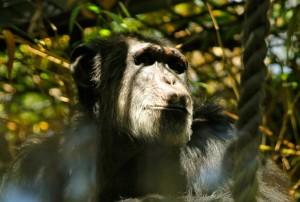 animales-del-mundo micos australia