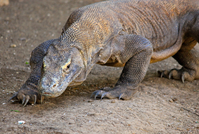 Hermosos e incre bles animales del mundo viaje minuto for Cosas insolitas e increibles