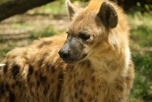 animales-del-mundo africa