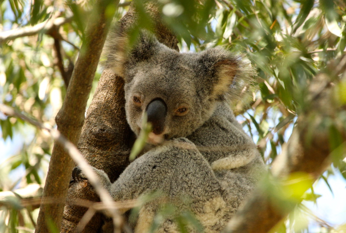 animales-del-mundo australia