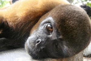 animales-del-mundo amazonas