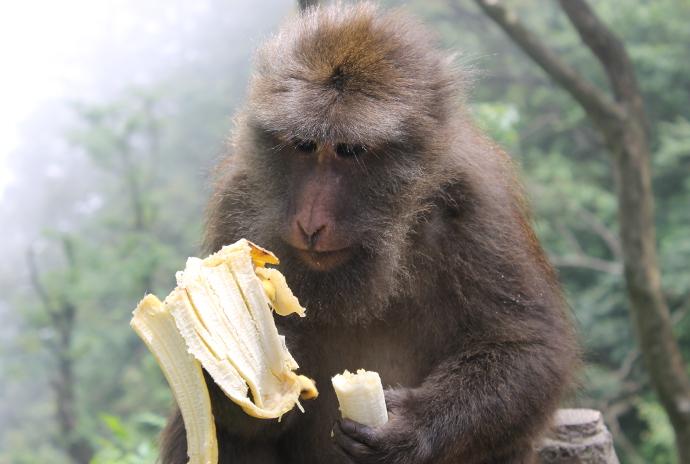 animales-del-mundo india