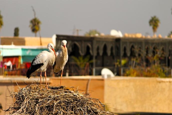 Cigüeñas en Marrakech